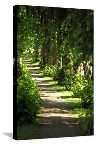 Schleswig-Holstein, Sieseby, Path Through Old Cemetery-Catharina Lux-Stretched Canvas Print