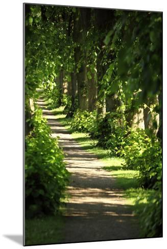 Schleswig-Holstein, Sieseby, Path Through Old Cemetery-Catharina Lux-Mounted Photographic Print