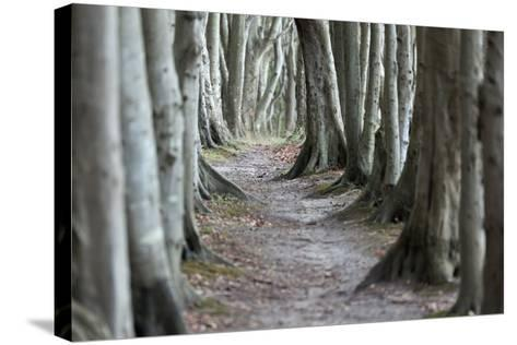 The Baltic Sea, RŸgen, Steep Coast Cape Arkona, Forest, Beeches-Catharina Lux-Stretched Canvas Print