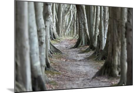 The Baltic Sea, RŸgen, Steep Coast Cape Arkona, Forest, Beeches-Catharina Lux-Mounted Photographic Print