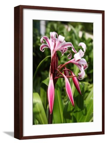 The Seychelles, La Digue, Seychelles Lily, Pink Blossoms-Catharina Lux-Framed Art Print