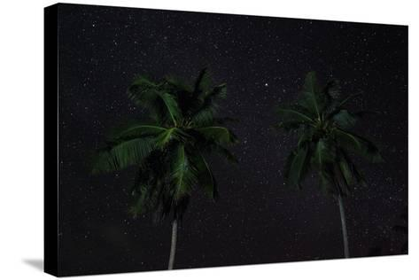 The Seychelles, La Digue, Palms, Starry Sky-Catharina Lux-Stretched Canvas Print