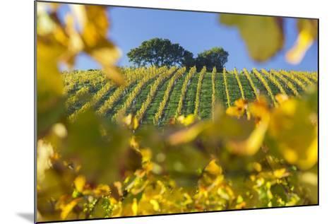 Autumnal Vineyards Between Gumpoldskirchen and Baden Bei Wien, Vienna Basin, Lower Austria, Austria-Rainer Mirau-Mounted Photographic Print