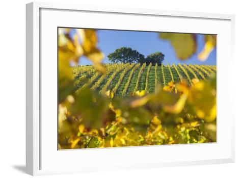 Autumnal Vineyards Between Gumpoldskirchen and Baden Bei Wien, Vienna Basin, Lower Austria, Austria-Rainer Mirau-Framed Art Print