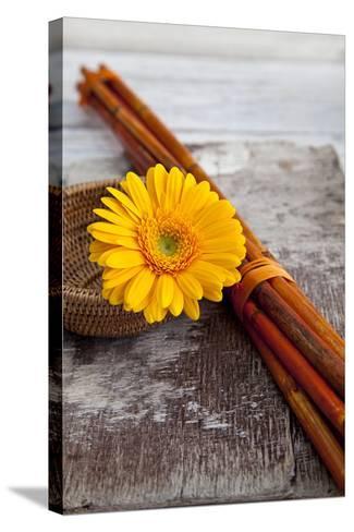 Gerbera, Flower, Still Life, Orange-Andrea Haase-Stretched Canvas Print