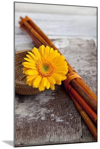 Gerbera, Flower, Still Life, Orange-Andrea Haase-Mounted Photographic Print