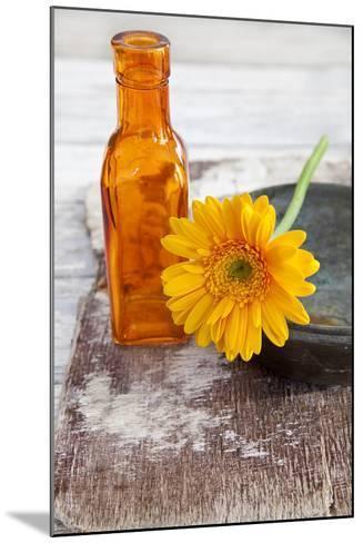Gerbera, Flower, Orange, Glass Bottle-Andrea Haase-Mounted Photographic Print