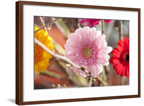 Flower, Gerbera, Blossom-Nikky Maier-Framed Art Print