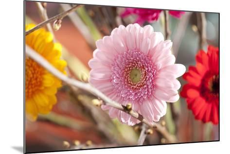 Flower, Gerbera, Blossom-Nikky Maier-Mounted Photographic Print