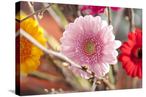 Flower, Gerbera, Blossom-Nikky Maier-Stretched Canvas Print