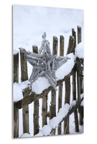 Poinsettia and Old Wooden Fence-Andrea Haase-Metal Print