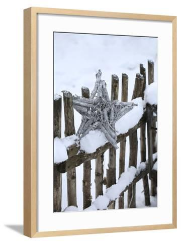 Poinsettia and Old Wooden Fence-Andrea Haase-Framed Art Print