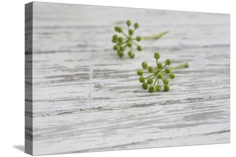 Still Life, EfeublŸten, Green, Wood, White-Andrea Haase-Stretched Canvas Print