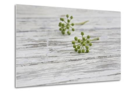 Still Life, EfeublŸten, Green, Wood, White-Andrea Haase-Metal Print