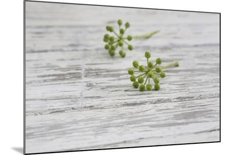 Still Life, EfeublŸten, Green, Wood, White-Andrea Haase-Mounted Photographic Print