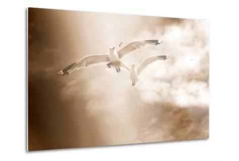 Two Gulls in Flight, Sky, Clouds, Sepia-Coloured-Alaya Gadeh-Metal Print