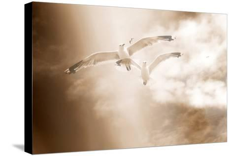 Two Gulls in Flight, Sky, Clouds, Sepia-Coloured-Alaya Gadeh-Stretched Canvas Print