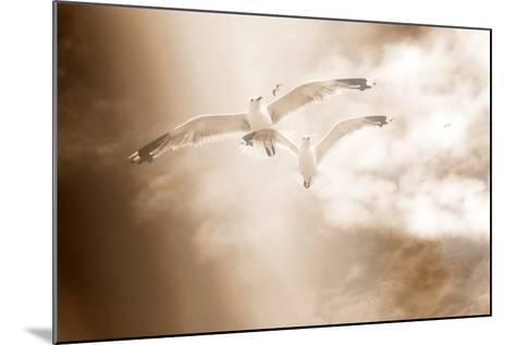Two Gulls in Flight, Sky, Clouds, Sepia-Coloured-Alaya Gadeh-Mounted Photographic Print