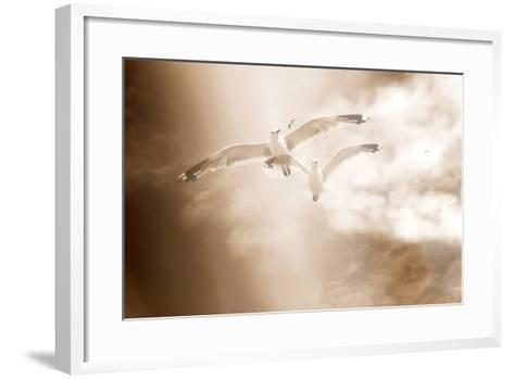 Two Gulls in Flight, Sky, Clouds, Sepia-Coloured-Alaya Gadeh-Framed Art Print