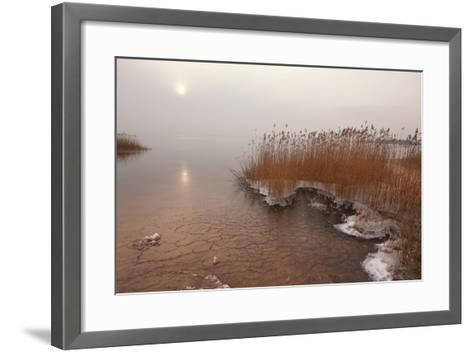 Usedom, Achterwasser, Reed, Frost-Catharina Lux-Framed Art Print
