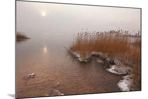 Usedom, Achterwasser, Reed, Frost-Catharina Lux-Mounted Photographic Print