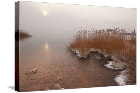 Usedom, Achterwasser, Reed, Frost-Catharina Lux-Stretched Canvas Print