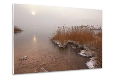 Usedom, Achterwasser, Reed, Frost-Catharina Lux-Metal Print