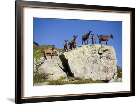 Austria, Styria, Schladminger Tauern, Rocks, Mountain-Goats, Nature-Rainer Mirau-Framed Art Print