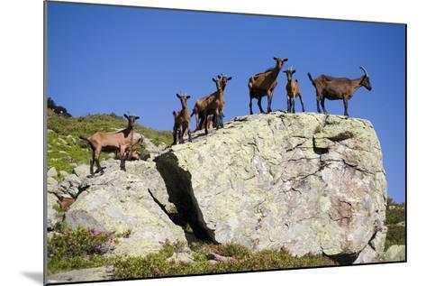 Austria, Styria, Schladminger Tauern, Rocks, Mountain-Goats, Nature-Rainer Mirau-Mounted Photographic Print