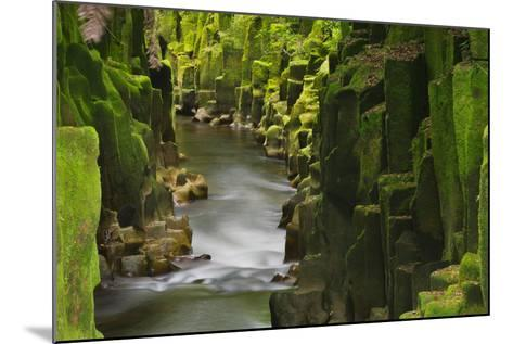 Whaiti-Nui-A-Toi Canyon, Whirinaki Forest Park, Bay of Plenty, North Island, New Zealand-Rainer Mirau-Mounted Photographic Print