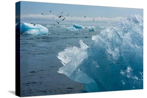 Atlantic Coast with Iceberg Remains at the Jškulsarlon-Catharina Lux-Stretched Canvas Print