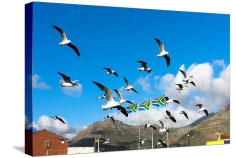 South Africa, Hout Bay, Gulls-Catharina Lux-Stretched Canvas Print