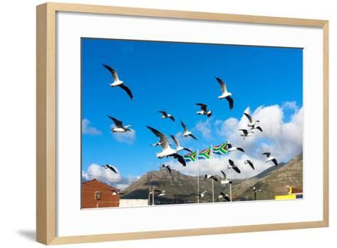 South Africa, Hout Bay, Gulls-Catharina Lux-Framed Art Print