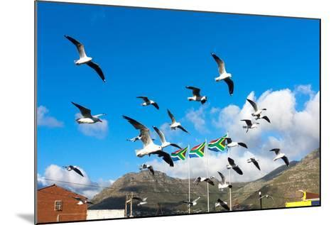 South Africa, Hout Bay, Gulls-Catharina Lux-Mounted Photographic Print