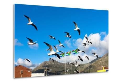 South Africa, Hout Bay, Gulls-Catharina Lux-Metal Print
