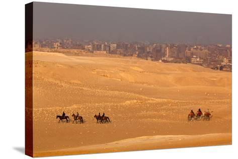 Egypt, Cairo, Giza, Evening Light, Camels and Horses-Catharina Lux-Stretched Canvas Print