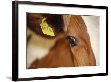 Farm, Cow, Eye, Ear Mark, Close-Up-Catharina Lux-Framed Art Print