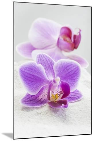 Orchid Blossoms on White Sand-Uwe Merkel-Mounted Photographic Print
