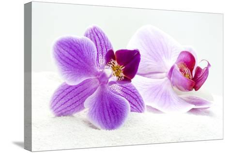 Orchid Blossoms on White Sand-Uwe Merkel-Stretched Canvas Print