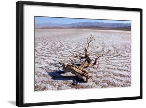 USA, Death Valley National Park, Salt Creek-Catharina Lux-Framed Art Print