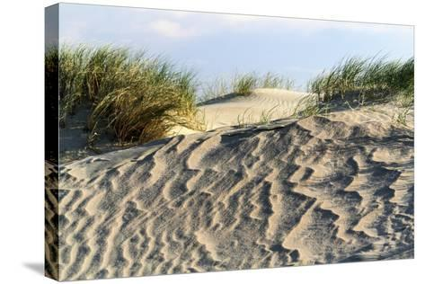 Lithuania, Curonian Spit, Perwalka, Drifting Sand Dune-Catharina Lux-Stretched Canvas Print