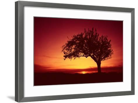 Solitaire-Tree, Silhouette, Sunset, Sunset, Nature-Ronald Wittek-Framed Art Print