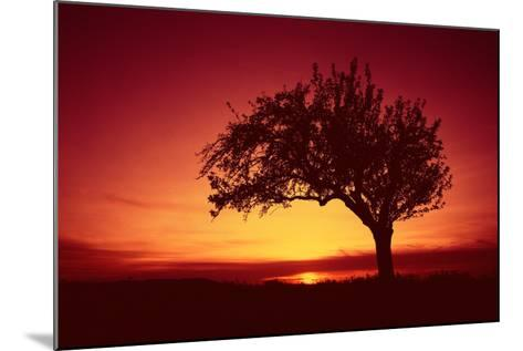 Solitaire-Tree, Silhouette, Sunset, Sunset, Nature-Ronald Wittek-Mounted Photographic Print