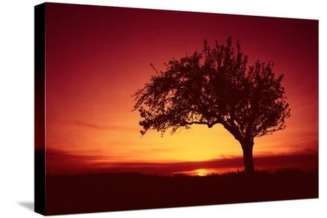 Solitaire-Tree, Silhouette, Sunset, Sunset, Nature-Ronald Wittek-Stretched Canvas Print
