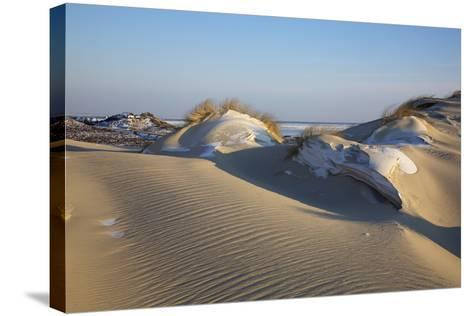 Wintry Dune Landscape Drifting Dune of List on the Island of Sylt in the Evening Light-Uwe Steffens-Stretched Canvas Print