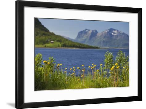 Norway, Northern Country, Steigen (Town), Sagfjorden, Straumfjorden, Flowers-Rainer Mirau-Framed Art Print