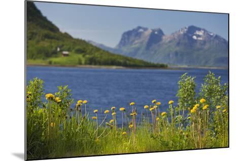 Norway, Northern Country, Steigen (Town), Sagfjorden, Straumfjorden, Flowers-Rainer Mirau-Mounted Photographic Print