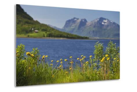 Norway, Northern Country, Steigen (Town), Sagfjorden, Straumfjorden, Flowers-Rainer Mirau-Metal Print