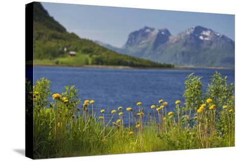 Norway, Northern Country, Steigen (Town), Sagfjorden, Straumfjorden, Flowers-Rainer Mirau-Stretched Canvas Print