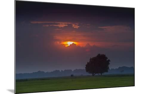 Sunset Above Field with Tree, Dykhausen, Sande, Frisia, Lower Saxony, Germany-Axel Ellerhorst-Mounted Photographic Print